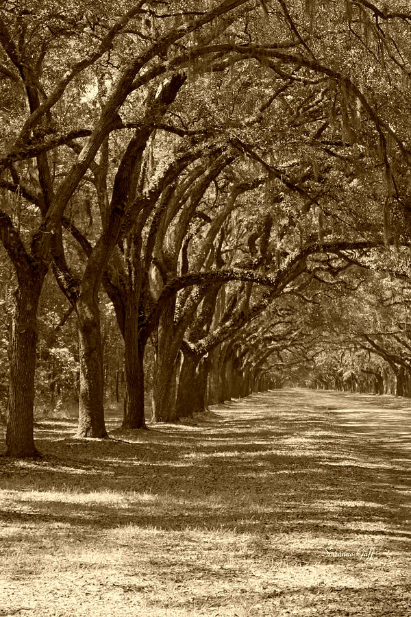 The Old South Series In Sepia Photograph  - The Old South Series In Sepia Fine Art Print