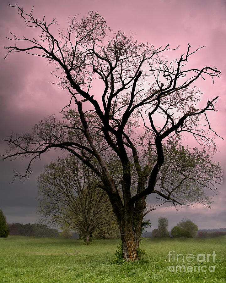 The Old Tree Photograph  - The Old Tree Fine Art Print