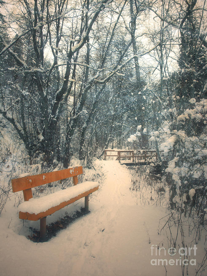 The Orange Bench Photograph  - The Orange Bench Fine Art Print