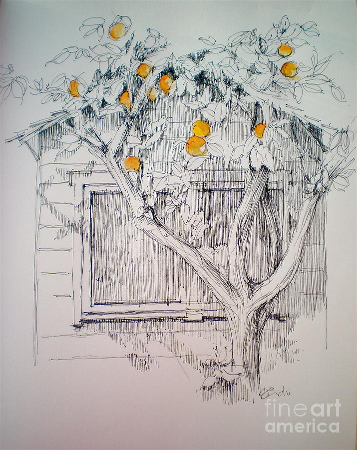 The Orange Tree Drawing by Dominique Eichi