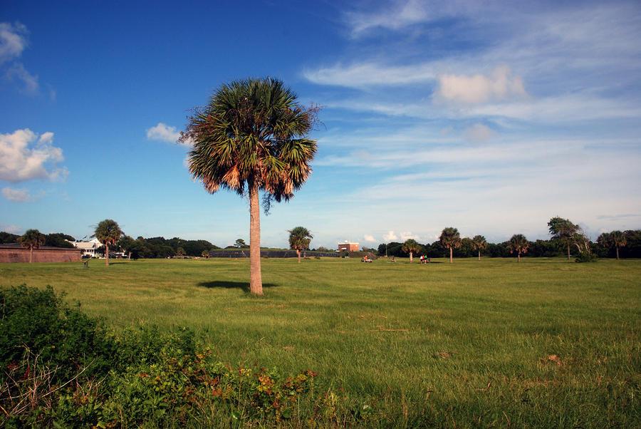 The Palmetto Tree Photograph