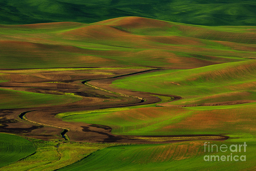 The Palouse Photograph  - The Palouse Fine Art Print