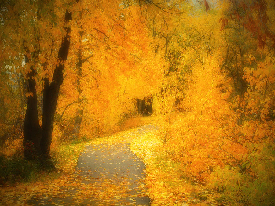 The Pathway Of Fallen Leaves Photograph