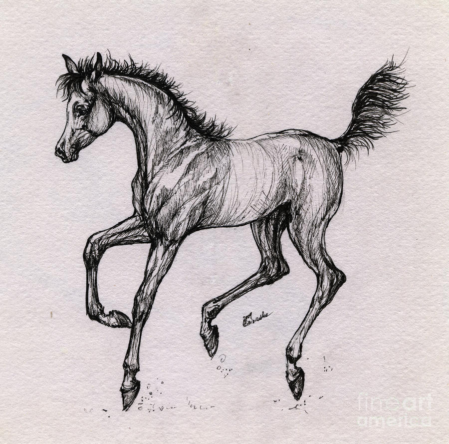 Pinto horse coloring pages for Quarter horse coloring pages