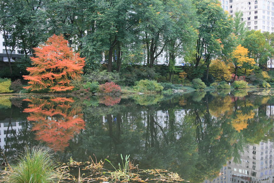The Pond In Central Park In Fall Photograph