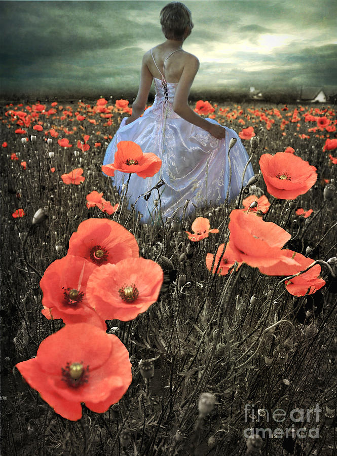The Poppy Field  Photograph