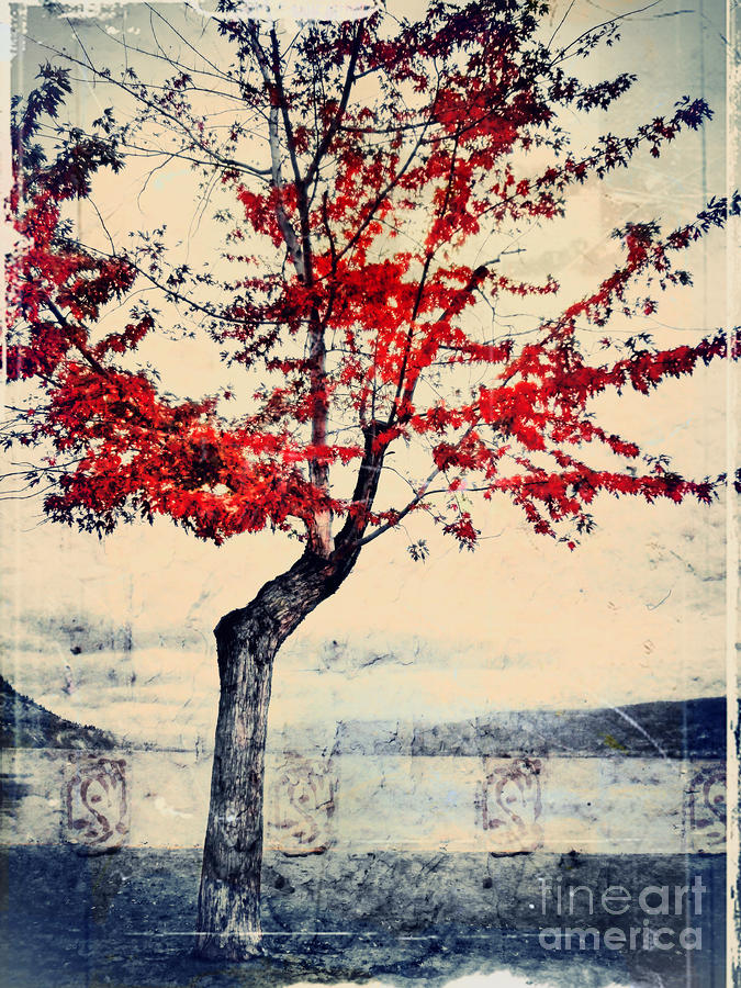 The Red Tree At Okanagan Lake Photograph