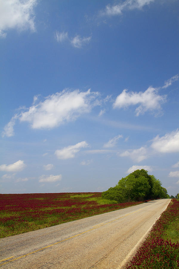 The Road Ahead Is Lined In Red Photograph