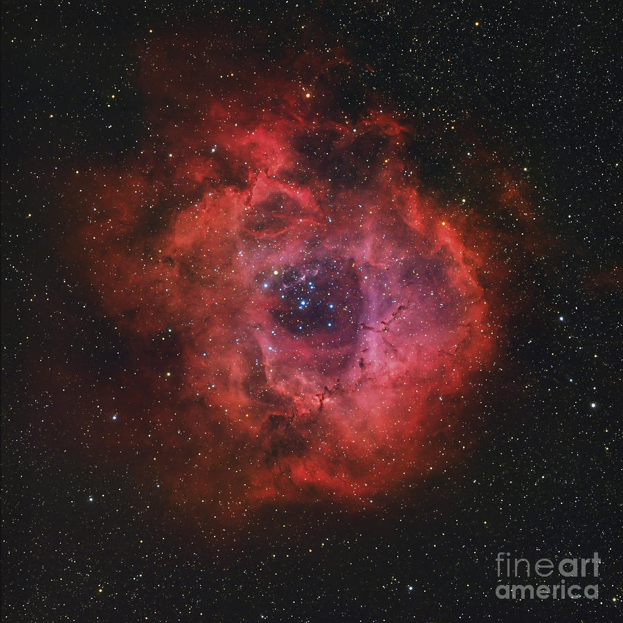 The Rosette Nebula Photograph