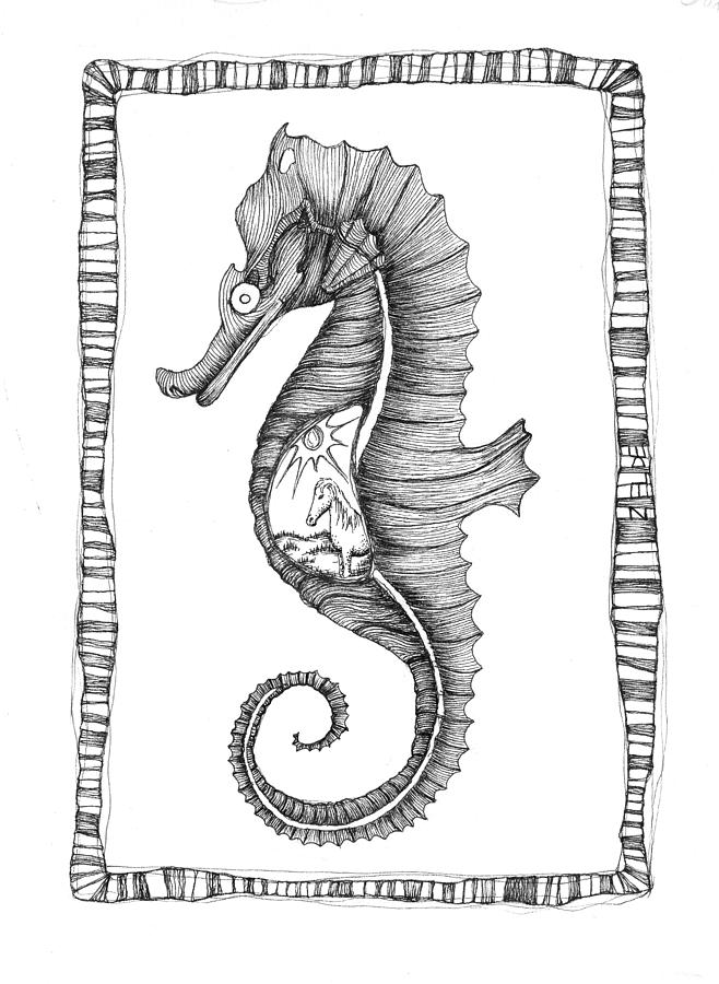 The Seahorse And The Equine Drawing