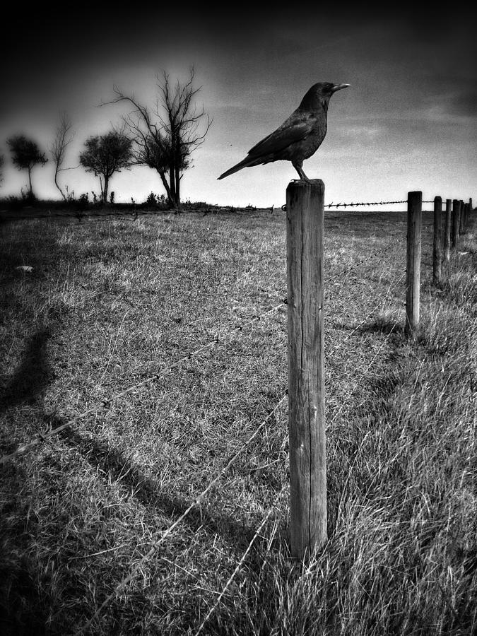 Crow Photograph - The Silent Warn  by JC Photography and Art