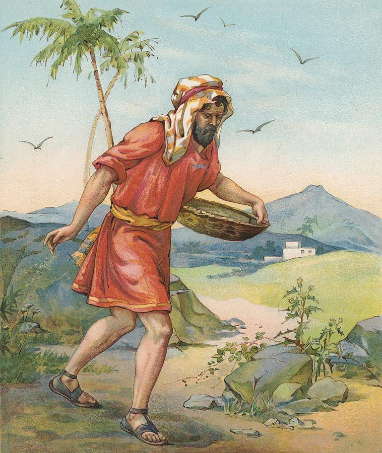 Bible Stories; Biblical; The Sower; Parable; Parables; Jesus Christ; Seed On The Ground Painting - The Sower by Ambrose Dudley