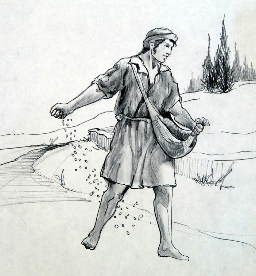 The Sower Drawing