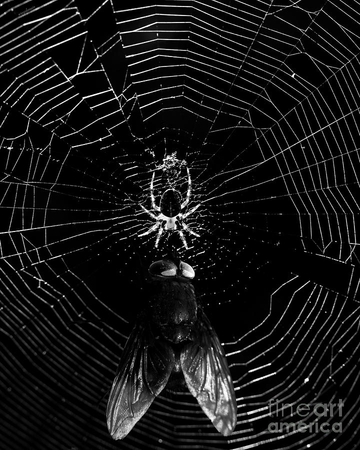 The Spider And The Fly . Black And White Photograph