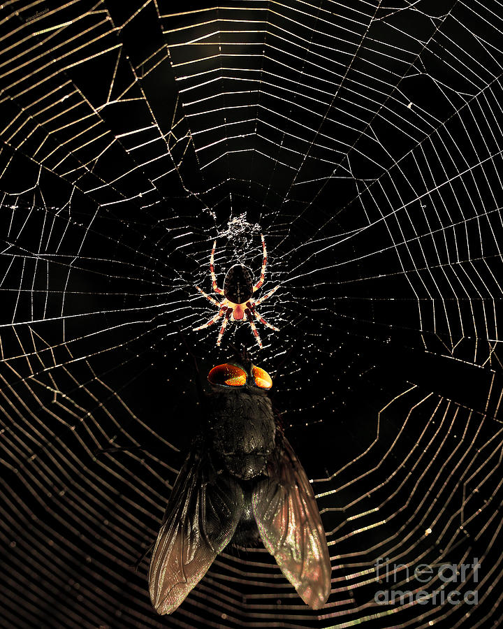 The Spider  And The Fly Photograph  - The Spider  And The Fly Fine Art Print