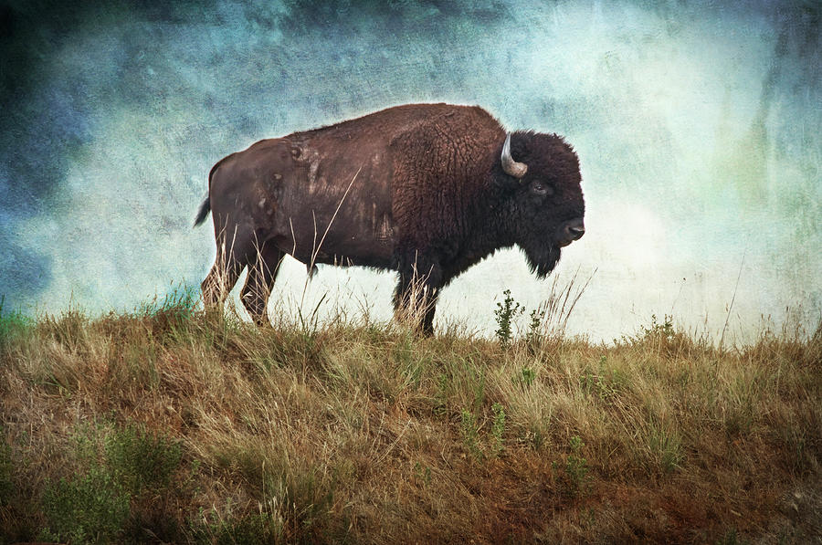 The Stance Photograph  - The Stance Fine Art Print