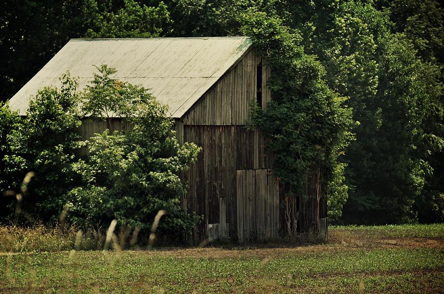 The Summer Barn Photograph