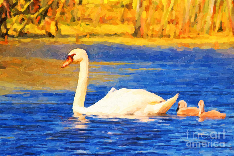 The Swan Family . Photoart Photograph