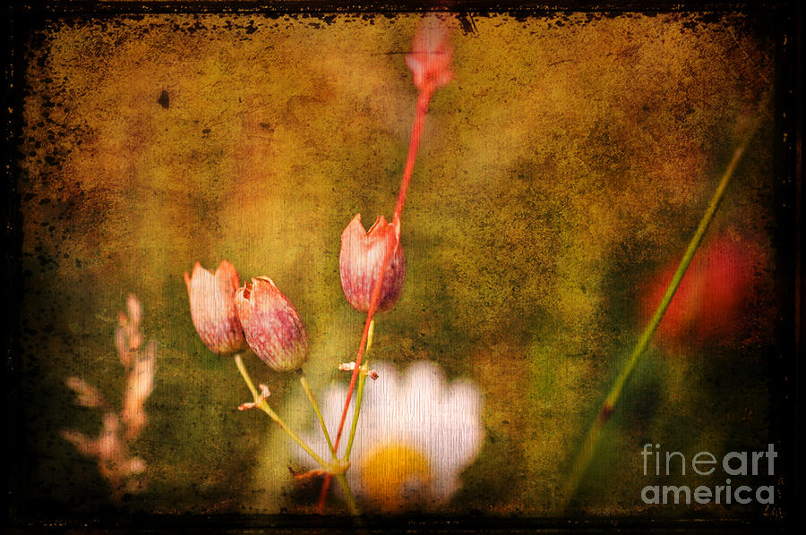 The Three Of Us Photograph  - The Three Of Us Fine Art Print