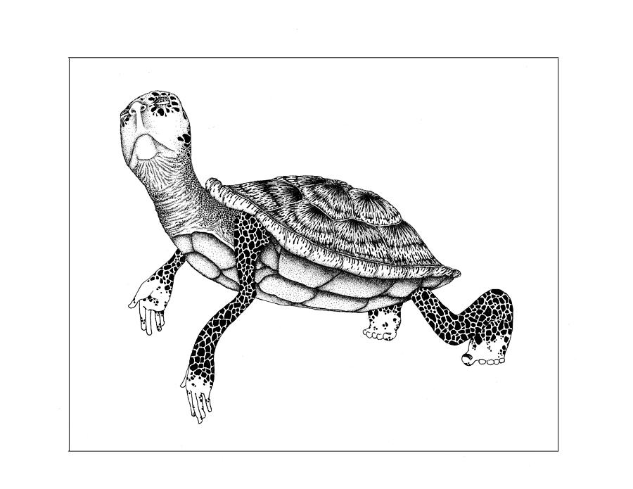 The Tortoise Drawing  - The Tortoise Fine Art Print
