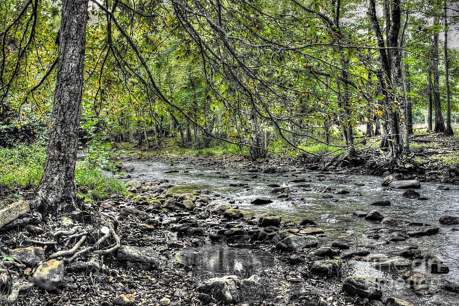 The Trout Stream Photograph
