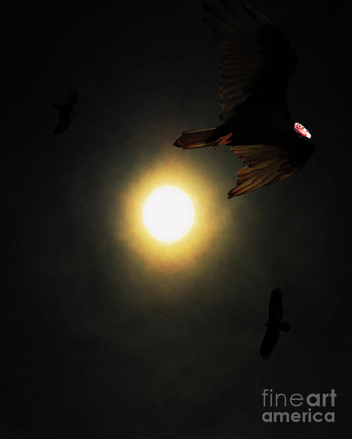 The Vultures Have Gathered In My Dreams . Portrait Cut Photograph
