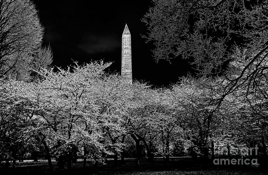 The Washington Monument At Night Photograph  - The Washington Monument At Night Fine Art Print