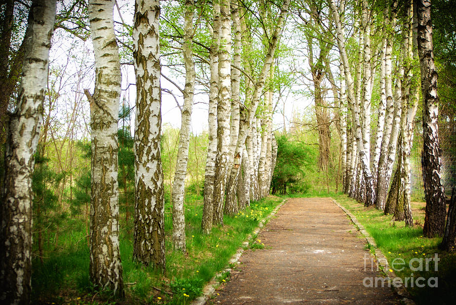 The Way Photograph  - The Way Fine Art Print