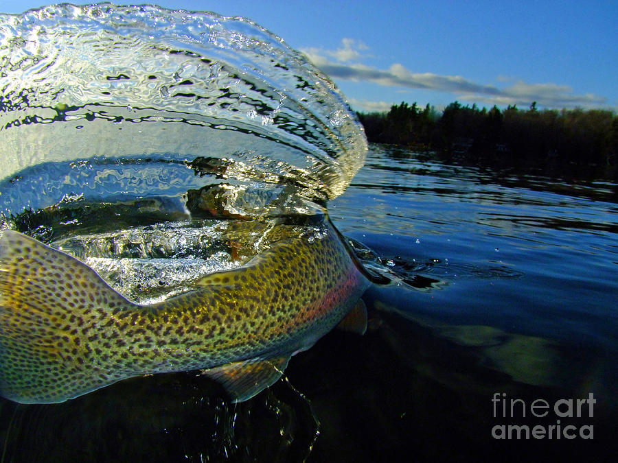 The Way Of The Trout Photograph  - The Way Of The Trout Fine Art Print
