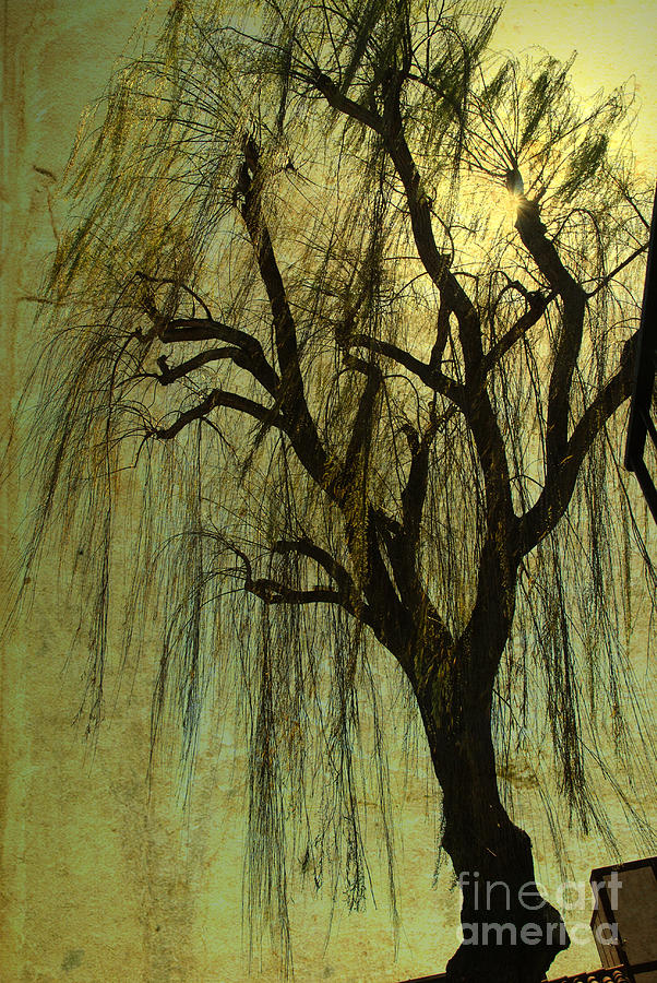 Tree Photograph - The Willow Tree by Susanne Van Hulst