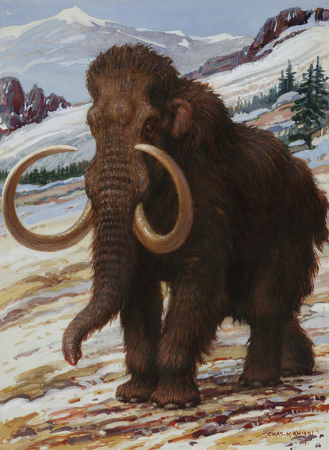 The Woolly Mammoth Is A Close Relative Photograph