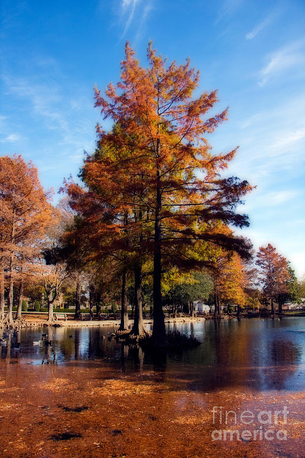 Theta Pond Photograph
