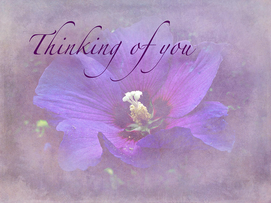 Sympathy Photograph - Thinking Of You Greeting Card - Rose Of Sharon ...