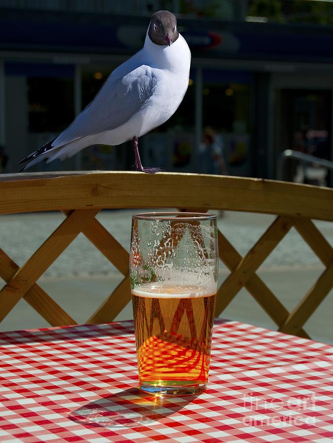Thirsteeeee... Photograph