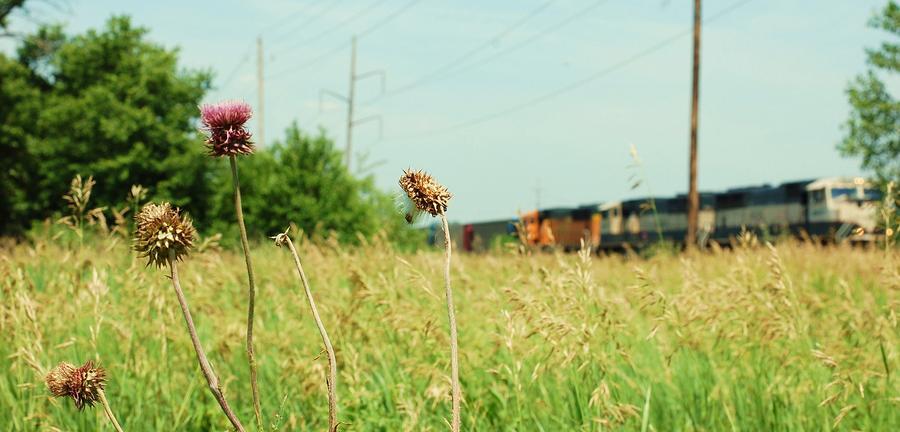 Thistle Rail Photograph