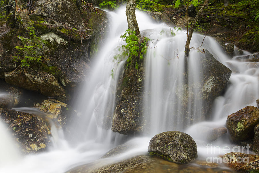 Thompson Falls - Pinkham Notch New Hampshire Usa Photograph  - Thompson Falls - Pinkham Notch New Hampshire Usa Fine Art Print