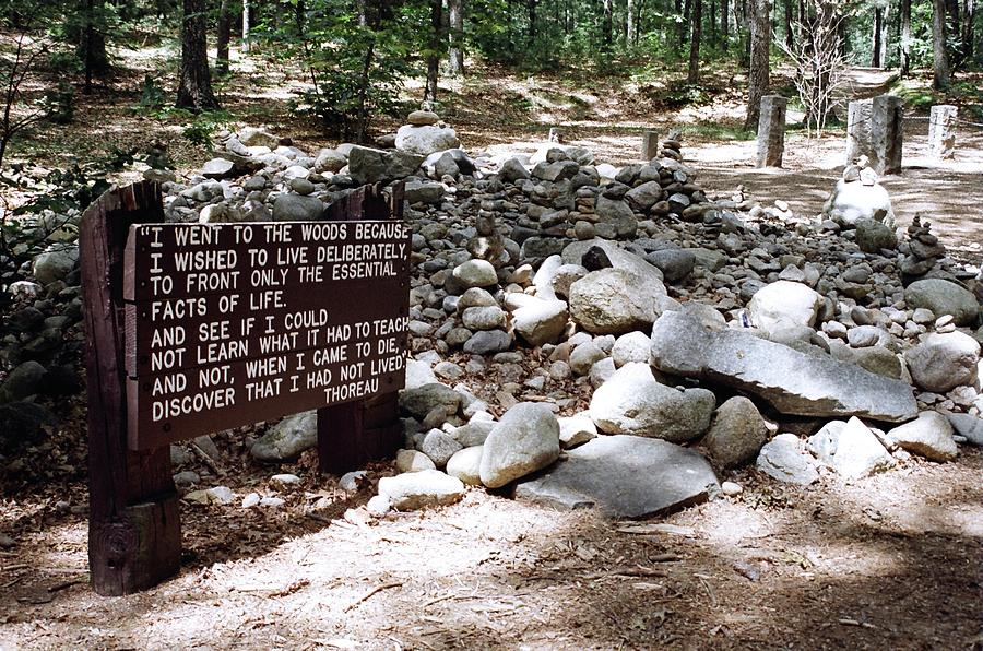 Thoreau Down Photograph