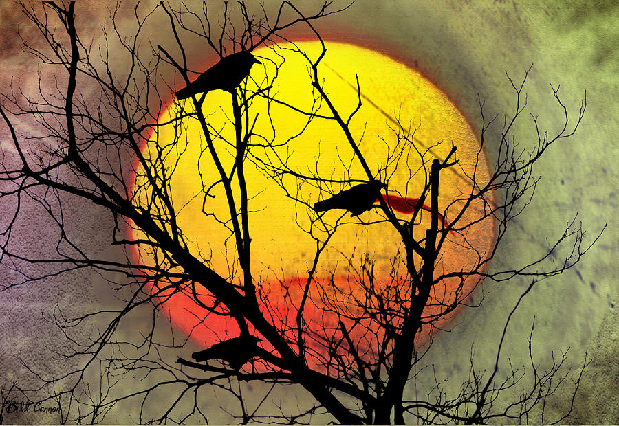 Three Blackbirds Photograph