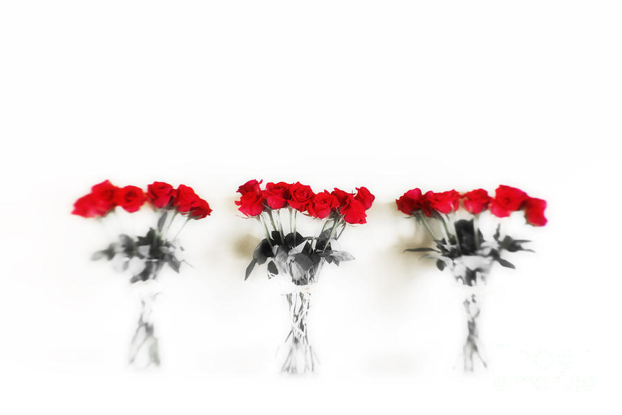 Three Dozen Roses Photograph  - Three Dozen Roses Fine Art Print