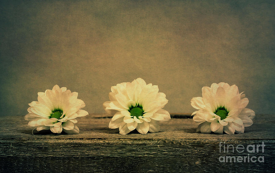 Three Flowers Photograph