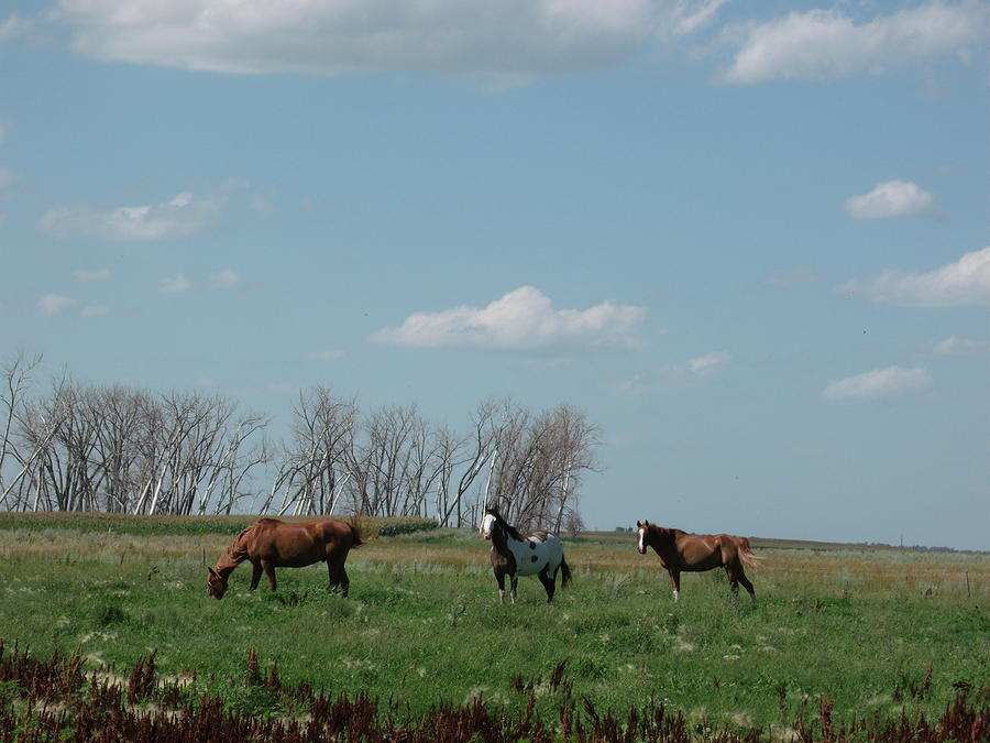 Three Horse Ranch Photograph  - Three Horse Ranch Fine Art Print