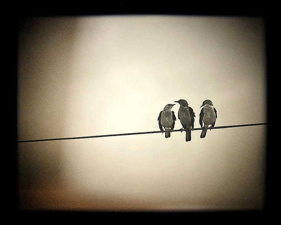 Three Little Birds Photograph