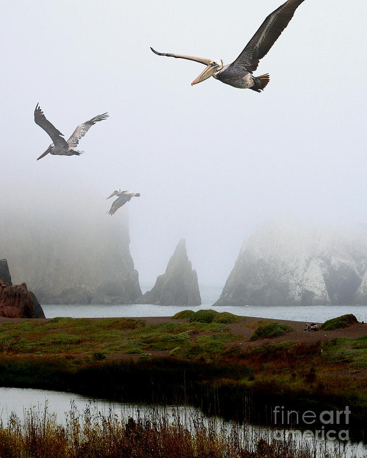Three Pelicans In Portrait Photograph