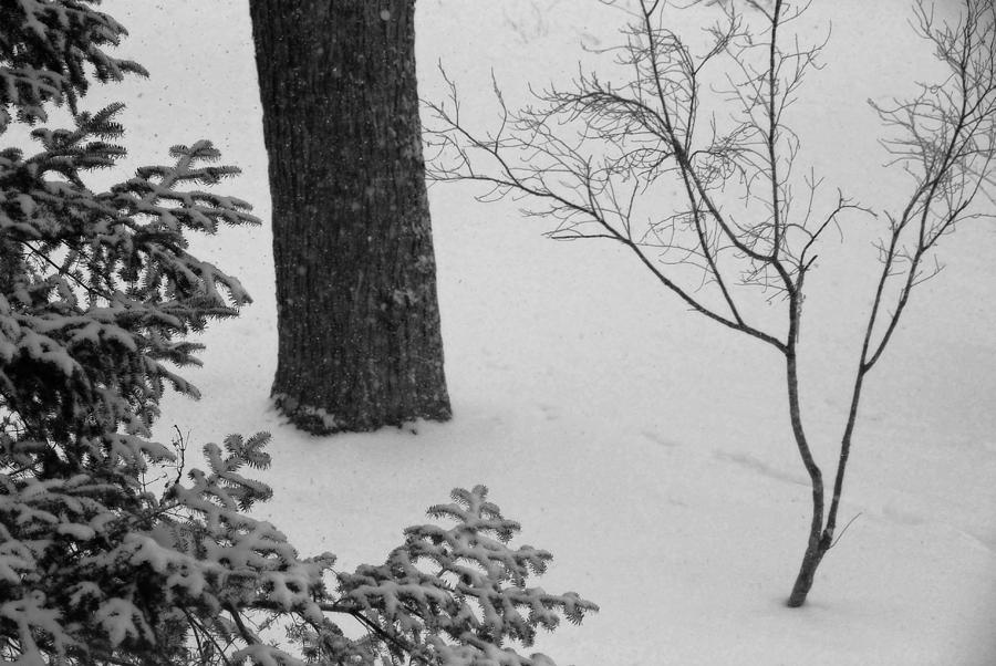 Winter Photograph - Three Trees In Snow by Simone Hester