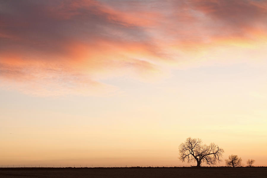 Three Trees Sunrise Sky Landscape Photograph