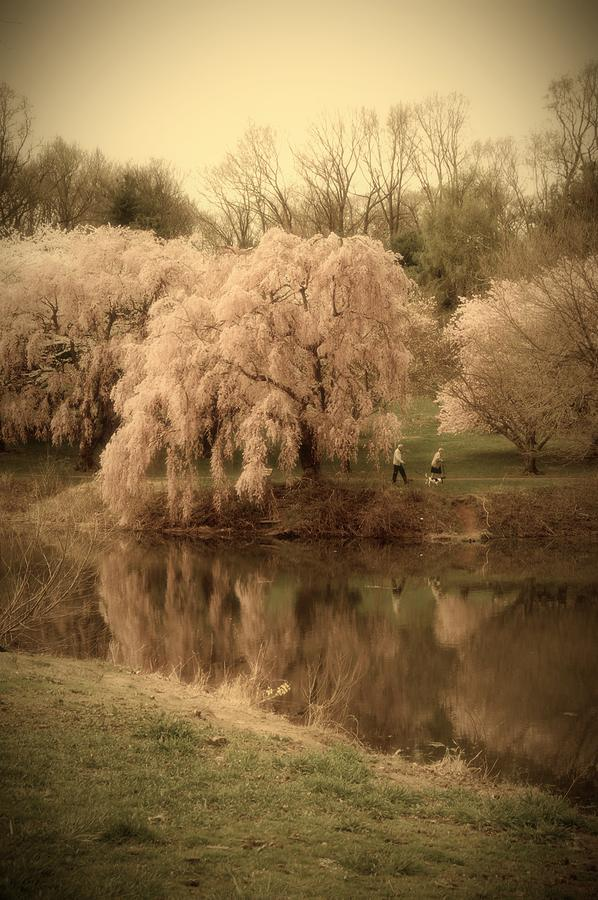 Through The Years - Holmdel Park Photograph