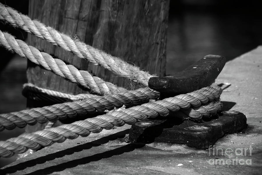 Tied Down Photograph  - Tied Down Fine Art Print