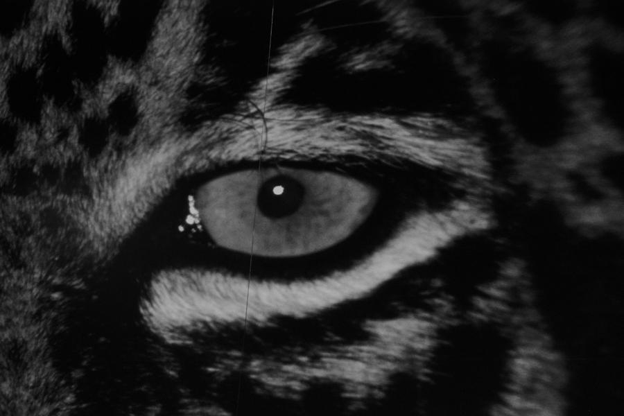 animal eye black and white - photo #6