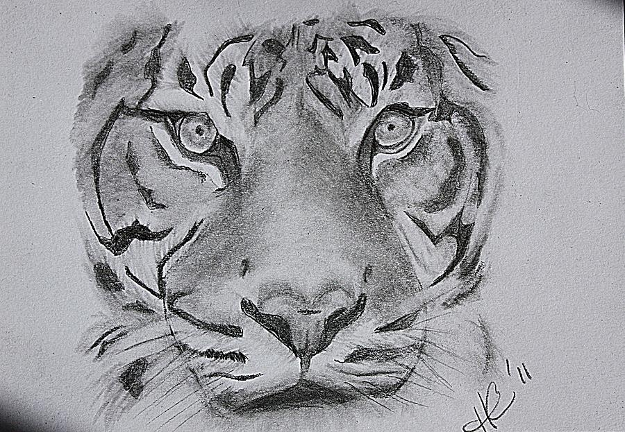 Line Drawing Of A Tiger S Face : Tiger face drawing