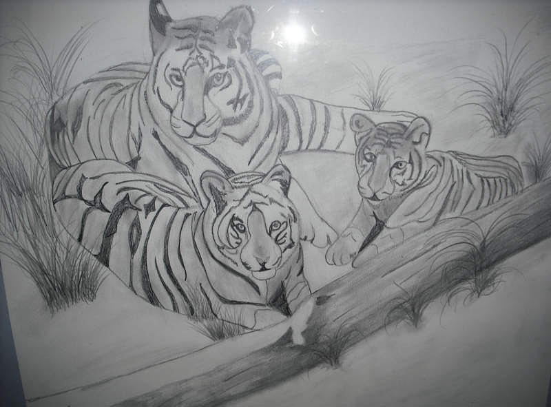 Tiger family drawing - photo#3